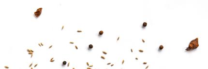 éléments graines